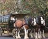 Clydesdale horse drawn restaurant