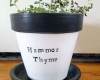 Hammer Thyme planter