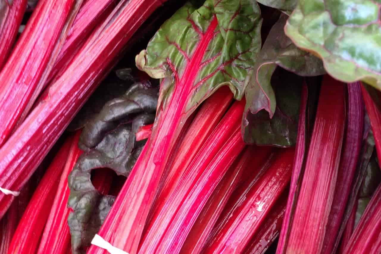 Bundled bright red rhubarb