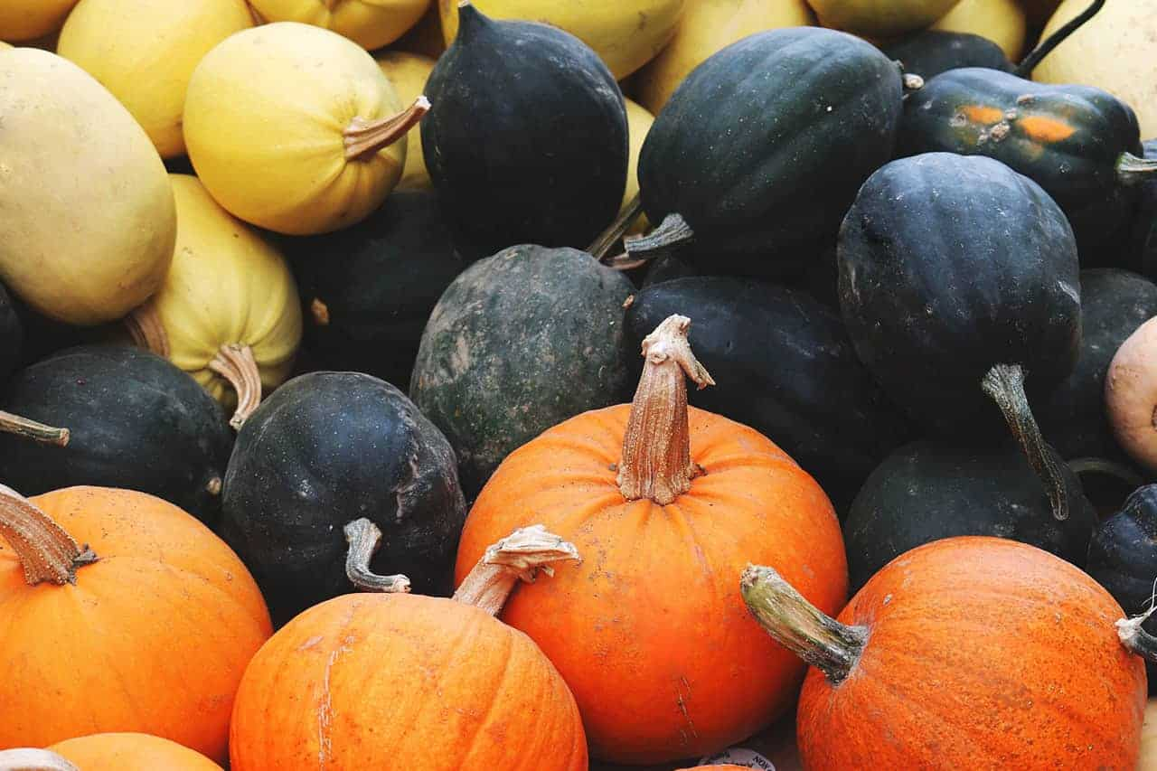 Assortment of autumn squash