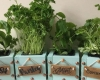 Wooden box herb planters